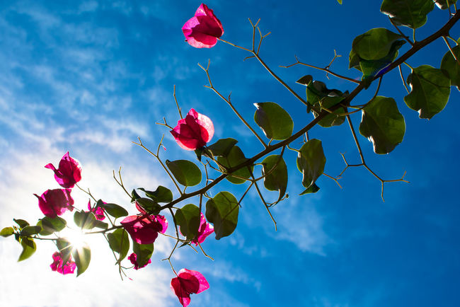 To the sky Backlight Pink Beauty In Nature Cielo Contra Luz Contraluz Flor Flower Fragility Leaf Plant Rosa Santa Rita Sky Sol A New Beginning