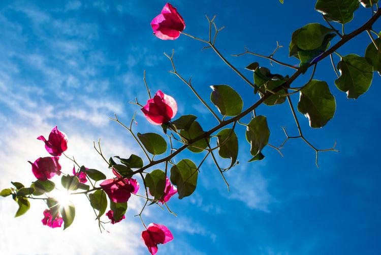 To the sky Backlight Pink Beauty In Nature Cielo Contra Luz Contraluz Flor Flower Fragility Leaf Plant Rosa Santa Rita Sky Sol