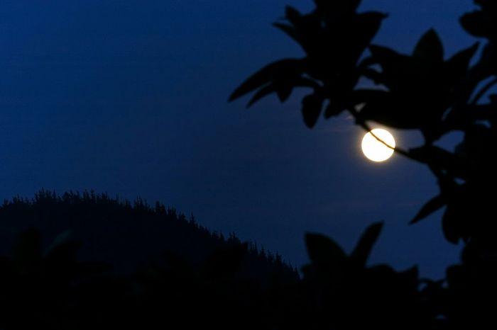 Harvestmoon Nocturna Lunallena Moonlight