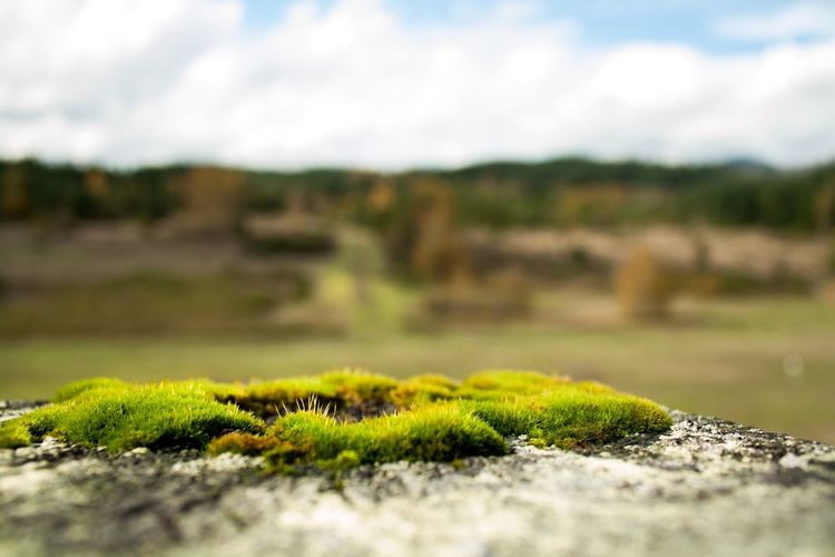 Moss Oregon