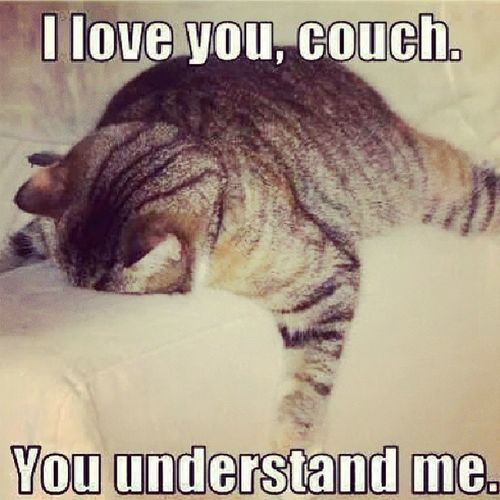 Relate Cat Catporn Couch understanding me mysel I you mine selfish