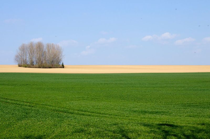 Scenic View Of Green Field