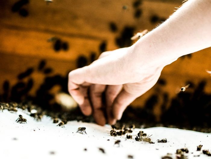 Cropped Image Of Hand Picking Bee