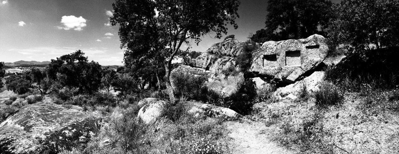 Archeological Treasure Archeological Site Archeologysardinia Sardegna Sardinia,italy Tree Plant Nature No People Day Outdoors Sky