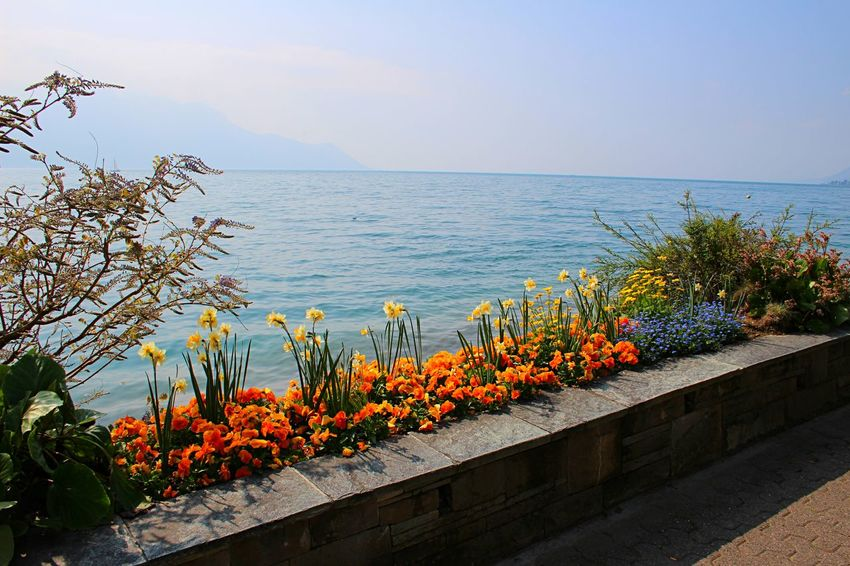 Beauty In Nature Copy Space Day Flower Freshness Growth Horizon Over Water Jazz Montreux Nature No People Promenade Sea Space For Copy Space For Text Summer Swiss Switzerland Water