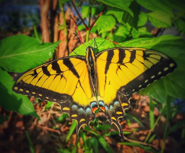 Nature Butterfly Outdoors