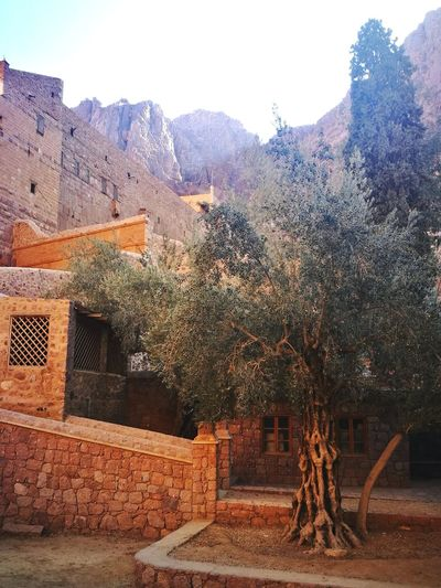 Tree Olivetree Mountains Nature Outdoors Sky Landscape Architecture Wall Building Exterior Saintkatherine's Sinai Egypt