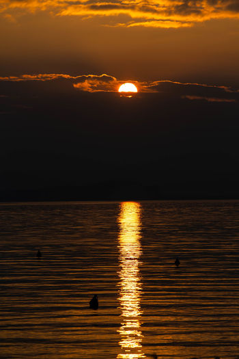 Water Sky Sunset Scenics - Nature Reflection Beauty In Nature Tranquil Scene Tranquility Animals In The Wild Animal Wildlife No People Orange Color Animal Animal Themes Nature Silhouette Vertebrate Cloud - Sky Sea Sun Outdoors Lake Garda Italy Gardasee,Italien Lago Di Garda Sundown
