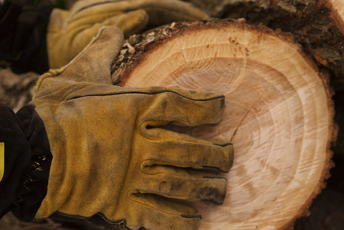 Wood bearing in gloves for workers. Bearing Carrying Close-up Day Gauntlet Gloves Human Body Part Human Hand Nature No People Tree Trunk Tree Trunk Close Up Wood Worker Worker At Work Working EyeEm Nature Lover