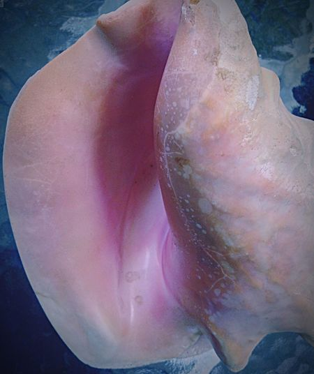 Sea Life Close-up Textured  Photography Conch Shell Feminazism Nature From The Ocean Sea Life Is My Core!