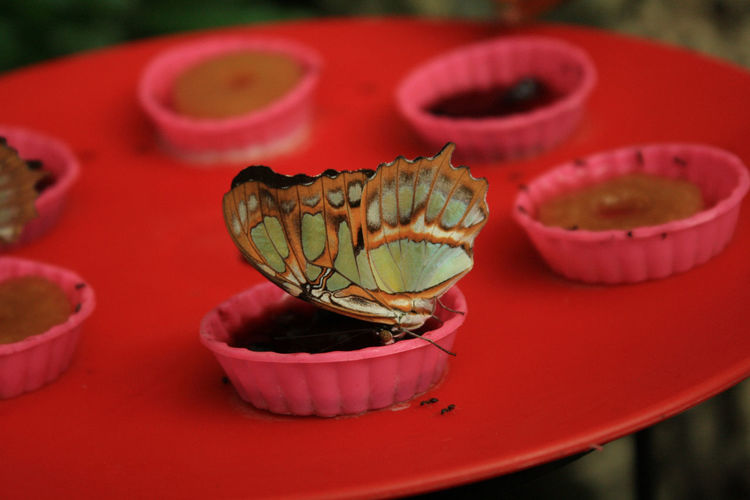 Close-Up Of Butterfly On Sweet Food