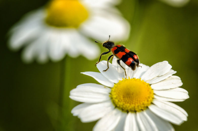 Flower Flowering Plant Animal Themes Insect Animal Wildlife Animal Invertebrate Beauty In Nature Fragility Vulnerability  One Animal Plant Animals In The Wild Petal Freshness Flower Head Growth Close-up Inflorescence Nature Pollen No People Animal Wing Pollination Outdoors