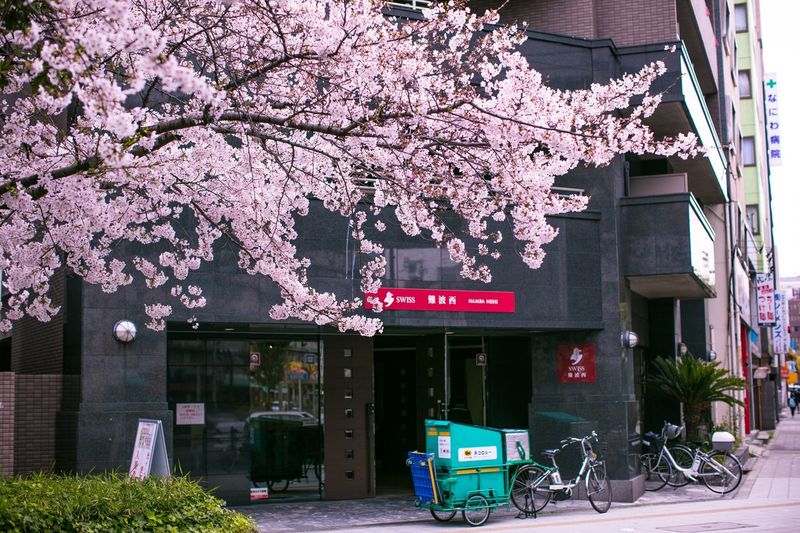 Pink cherry blossom tree in front of building