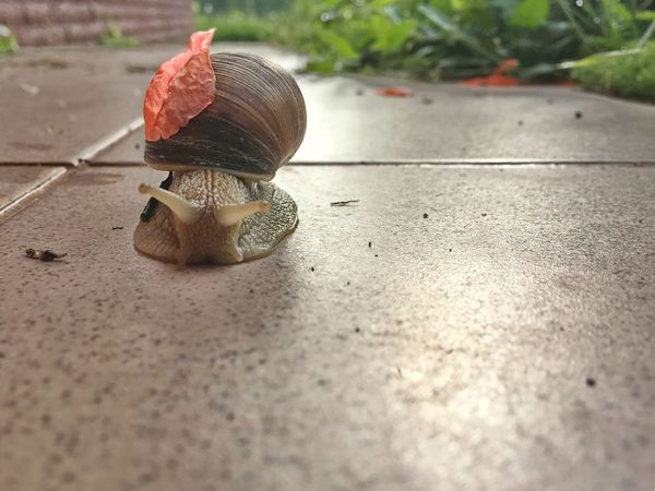 Snails Snail🐌 Snail Animal Themes Animal Wildlife Animal Animals In The Wild Invertebrate One Animal Close-up Insect No People Gastropod Crawling Shell Snail Mollusk Outdoors Surface Level