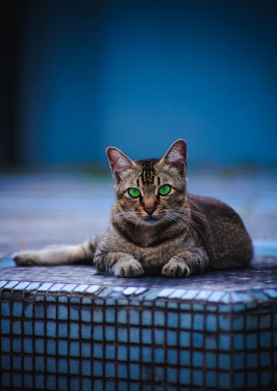 Green Eye Cat EyeEm Nature Lover EyeEm Best Shots Stray Animal Stray Cat Green Eye Tabby Whisker Indoors  Resting Basket Sitting Focus On Foreground Vertebrate Relaxation No People Looking At Camera Portrait One Animal Animal Domestic Animals Feline Animal Themes Mammal Domestic Cat Domestic Pets Cat Indoors  Blue