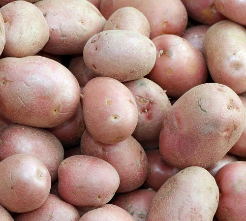 red potatoes a very valuable quality to prepare many meals Potato Roana Italia Abundance Asiago Backgrounds Close-up Food Food And Drink Foods Freshness Fruit Full Frame Market Oragnic Outdoors Patata Patate Potatoes Raw Potato Raw Potatoes Red Potato Red Potatoes Retail  Roana Rotzo