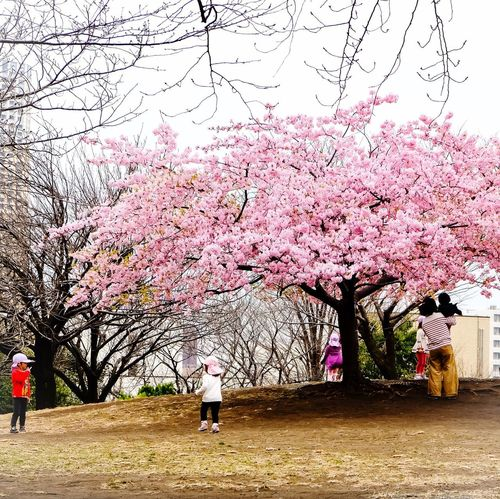 Under the tree Tree Cherry Blossom Cherry Tree Flower Blossom Pink Color Branch Springtime Beauty In Nature Nature Real People Pink Clear Sky Growth Kids Being Kids Kids Playing Kids Having Fun Kids Mother Mother & Daughter Mother And Son Sakura Sakura Blossom