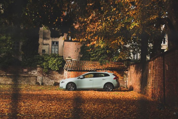 Tree Building Exterior Built_Structure Car Architecture Land Vehicle Transportation Mode Of Transport No People Outdoors Growth Nature Day Volvo Volvocars VolvoV40 V40 Canon Canonphotography Carphotography Canon EOS 70D Canon 70d Autumn Colors Lighting