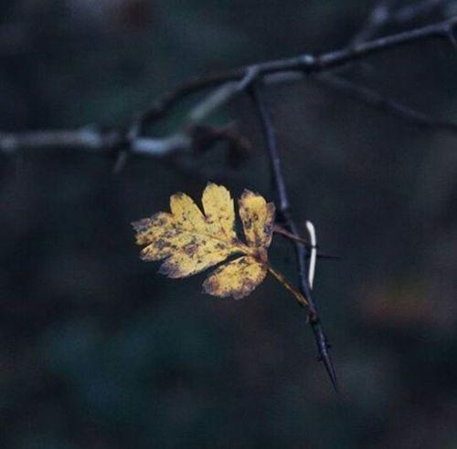 Fotography Nature Photography Fotonatural Photo Naturaleza🌵🌻🎶 Nature Tierra First Eyeem Photo Naturaleza🌾🌿
