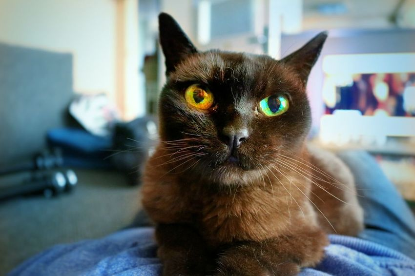 Cat One Animal Pets Domestic Cat Animal Themes Indoors  Cat Animal Head  Front View Animal Eye Focus On Foreground Portrait Selective Focus Dead Rip Cats Cat Lovers Catsofinstagram Photography Photographer Photo Day Travel Animal
