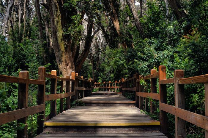 Patagonia Argentina Bosque De Arrayanes Villa La Angostura