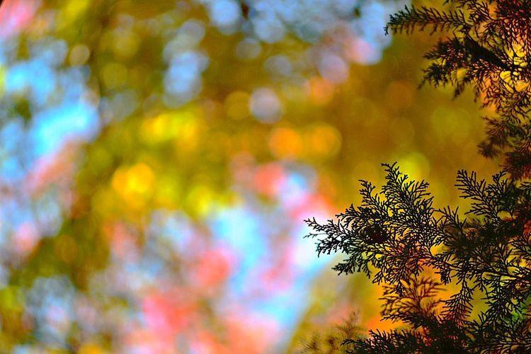 自然のイルミネーション…なんてねぇ〜💦 EyeEm Nature Lover Beautiful Nature Enjoying The View From My Point Of View Hanging Out Hagging A Tree Bokeh Photography Bokeh Bubbles Colorful Leaf 🍂 Autumn Leafs EyeEm Gallery Eye4photography  Early Winter Creative Light And Shadow