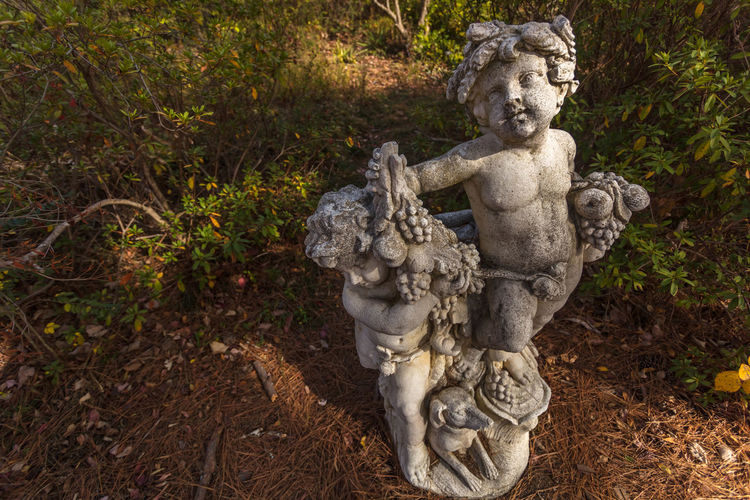 Wide-Angle Portrait at the Vines Botanical Gardens Art And Craft Close-up Day Human Representation No People Outdoors Sculpture Statue