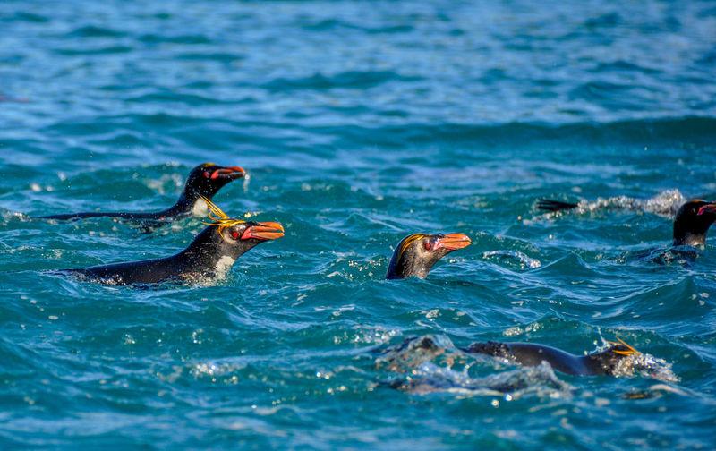 Ducks swimming in sea