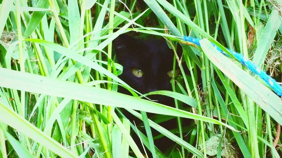 In The Jungle Cat Eyes Cat Eyes Watching You Peeking Through Stalking