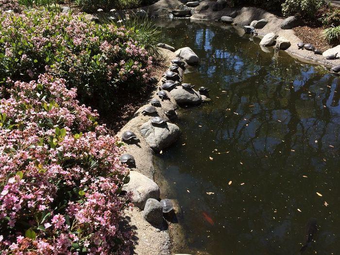 A sunny afternoon at Caltech, Pasadena