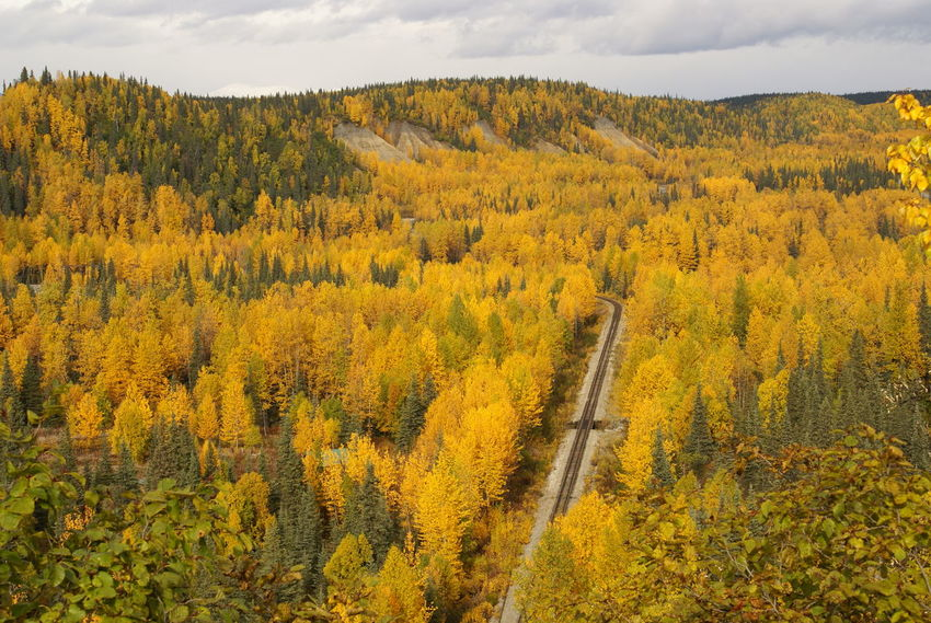 Alaska Beauty In Nature Fall Fall In Alaska Landscape Nature Outdoors Parks Hwy Railroad Railroad Track Tranquil Scene