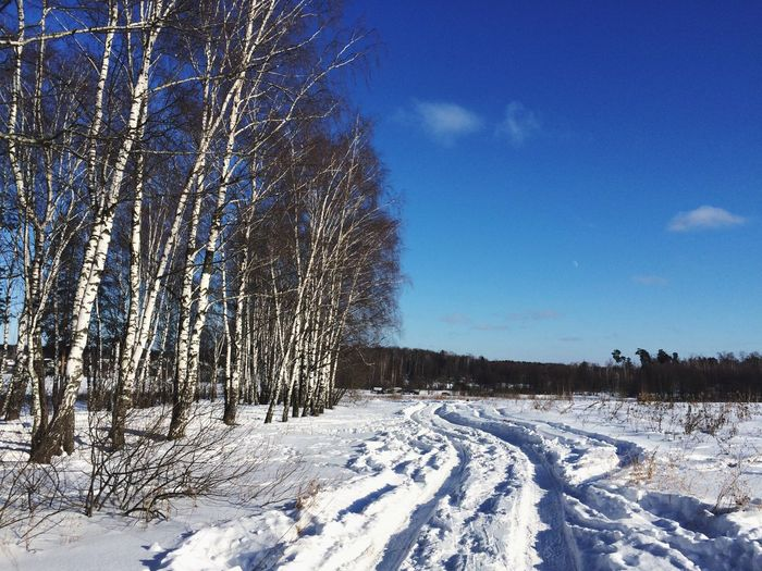 My hometown in Russia Winter Snow Cold Temperature Nature Tranquility Tree Beauty In Nature Scenics Day Tranquil Scene Sky Landscape No People Outdoors Bare Tree Russia Bluesky Hometown Sky