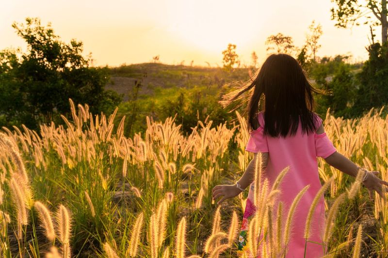 Running in the golden grass field in the evening. Sunset Glass Flower Play Plant Leisure Activity Sky Field One Person Real People Women Rear View Growth Land Lifestyles Nature Grass Tree Sunlight Hair Hairstyle Beauty In Nature