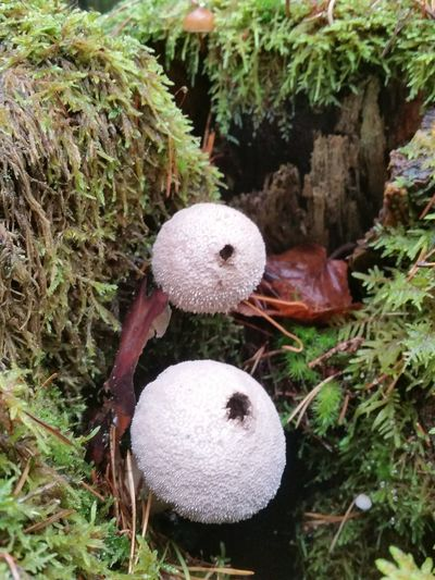 Growth Nature No People Field High Angle View Day Fungus Beauty In Nature Close-up Outdoors Plant Mushroom Toadstool Grass