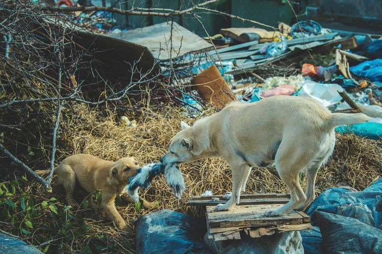 Outdoors Dogslife Dogs Stray Animal Poverty Dump