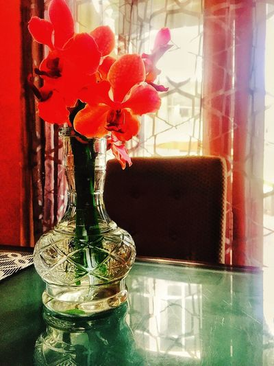 Be my Valentine😄❤️💖😍 Orchids! Orchids Orchidslover Flowersforyou Flowers In A Vase Flowers On The Table Reflection On Flowersandvase Beautifulorchids Beautiful Flowers. LLLimages IPS2016Stilllife