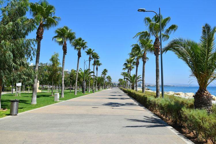 Palm Sun Holiday