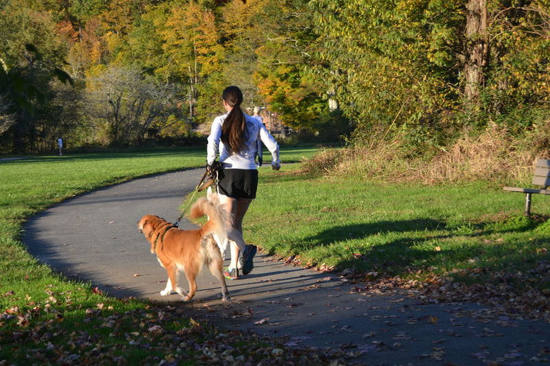 Young Woman on a Run with Dogs on Boone, NC greenway Girl Running With Dog Greenway Pets Corner Running Autumn Casual Clothing Dog Dog Lead Domestic Animals Grass Leisure Activity Nature One Animal One Person Park - Man Made Space Pathway Pets Shorts Trail Tree Walking Walking Dog Yellow Dog  Young Woman Young Woman Running