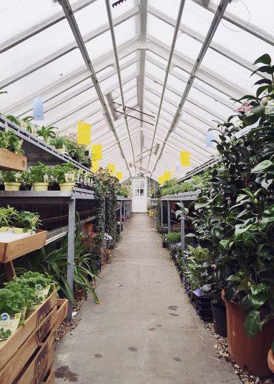 Narrow walkway along plants