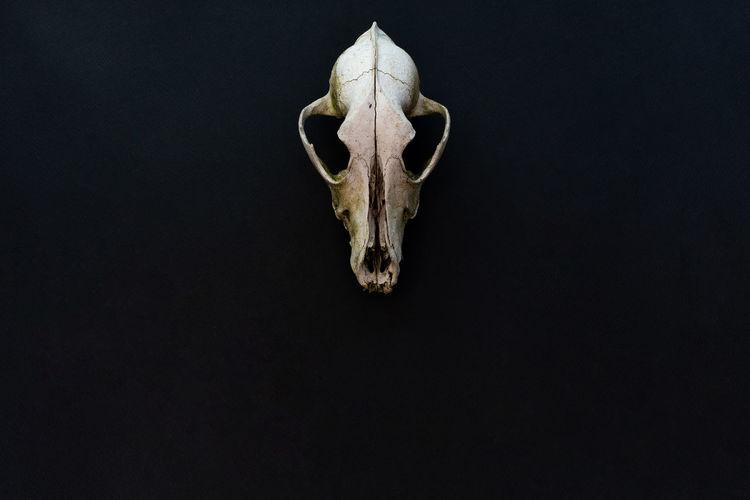 View of animal skull