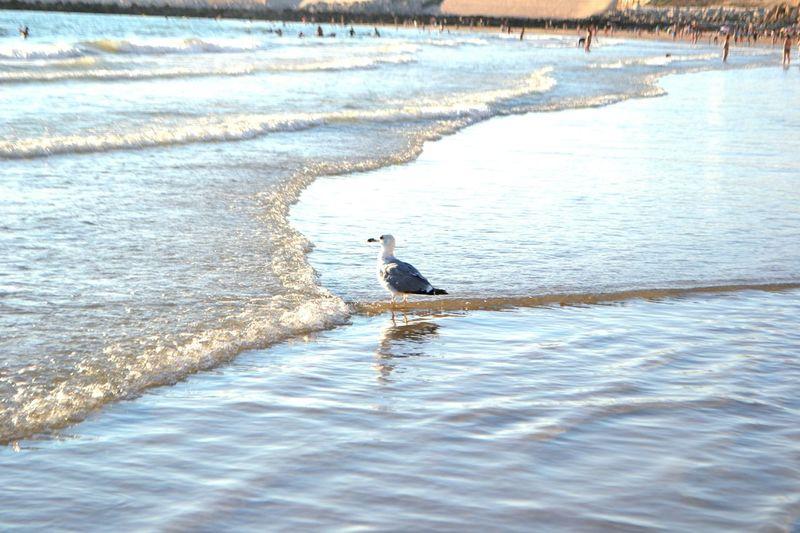 Nature Photography Natural Beauty Naturelovers Sea Mar Meer Möwe Seemöwe Gull Seagull Seagulls And Sea Spanien SPAIN Spain♥ España España🇪🇸