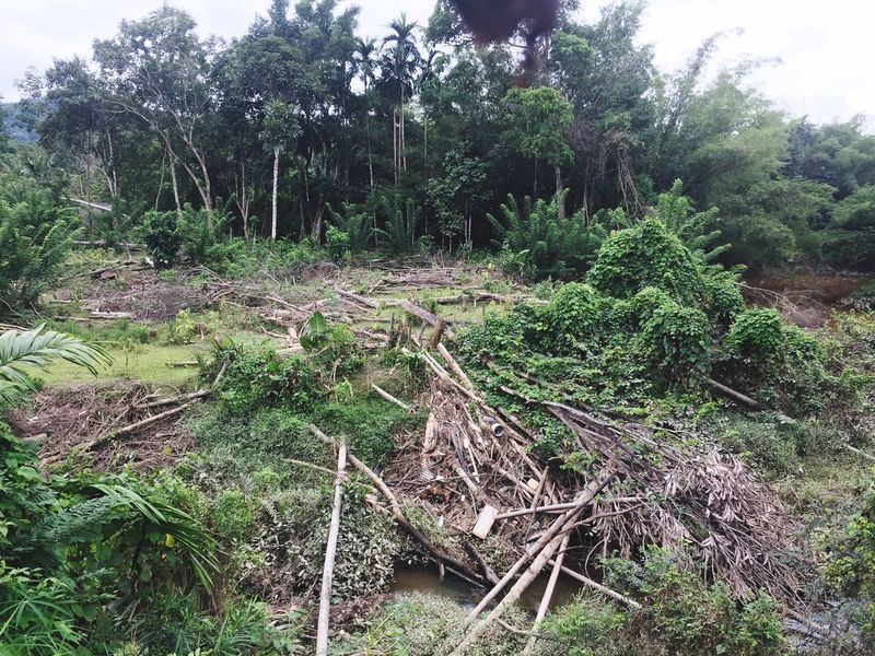 Deforestation Effect Polution Is All Around The World Save The Nature