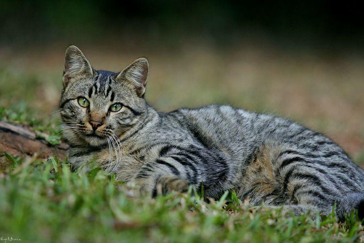 Cat Cat Cats