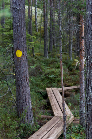 Finland Marker Tree Walk Day Forest Nature No People Outdoors Treck Tree Trunk Waypoint Yellow Paint The Town Yellow