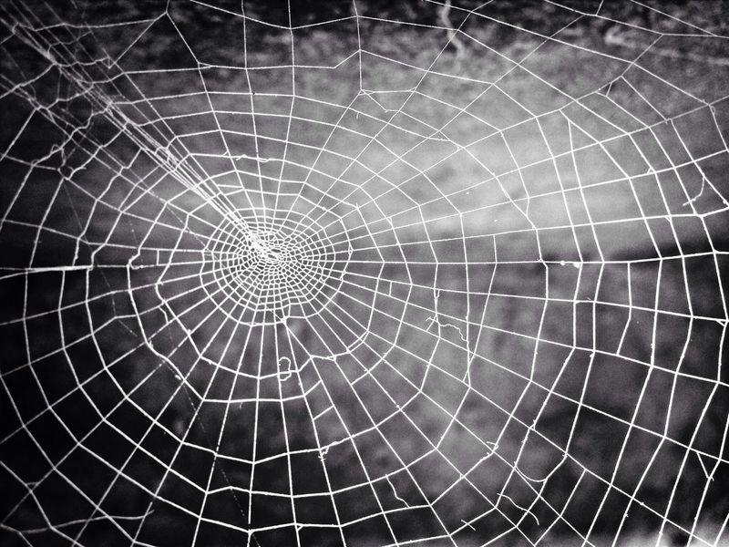 Spider Web Backyard The Art Of Nature Blackandwhite