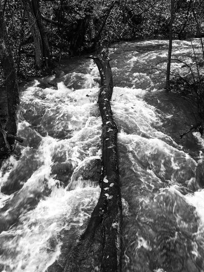 Water Nature Tree Beauty In Nature River Outdoors Landscape Rapids Trunk Black And White Blackandwhite B&w
