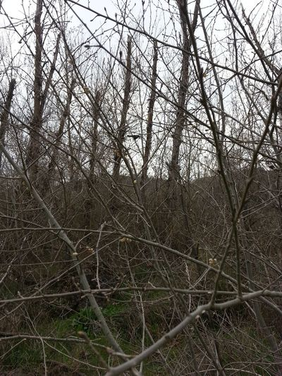 Bare Tree Beauty In Nature Branch Chaos Day Growth Landscape Nature No People Outdoors Scenics Sky Tangled Thicket Tranquil Scene Tranquility Tree