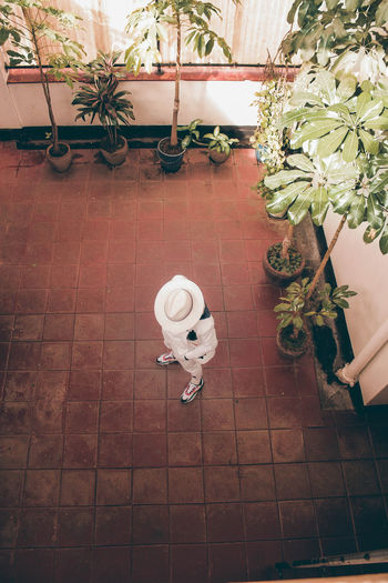 High angle view of potted plants on tiled floor