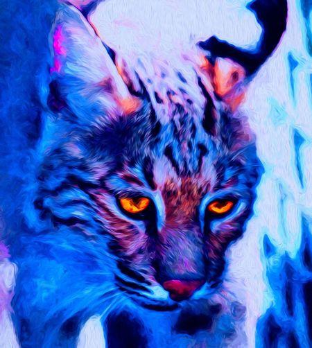 bobcat DbJR EyeEmNewHere