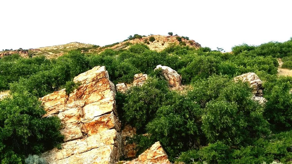 Nature Landscape Desert Plant Beauty In Nature Tree Sky Mountain Outdoors EyeEm Selects EyeEmNewHere Rocks And Sky